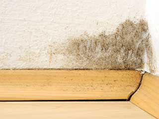 Mold Removal | Hacienda Heights Carpet Cleaning
